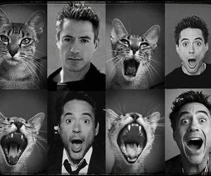 Avengers, cat, and robert downey jr image