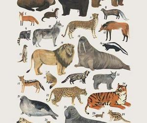 biology and zoology image