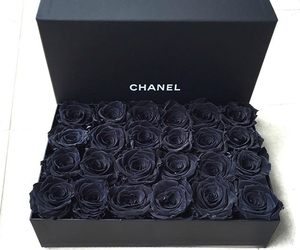 rose, chanel, and black image