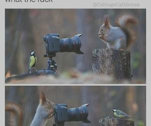 bird, camera, and funny image