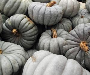 autumn, green, and pumpkin image