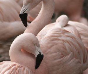 beautifull, rosa, and animal image