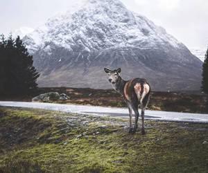 deer, europe, and highlands image