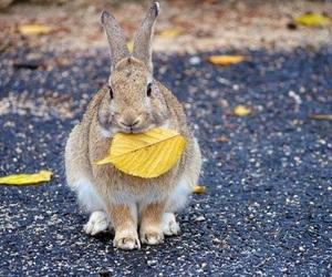 animal, rabbit, and autumn image