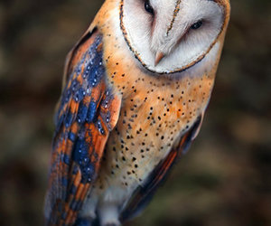 owl, animal, and bird image