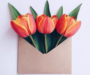 tulip and flower image