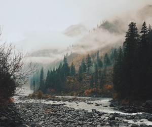 nature, creek, and fog image