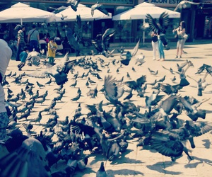 day, pigeons, and Doves image