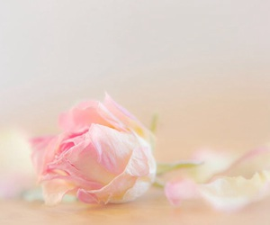 colors, pink, and rose image