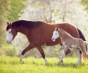 baby, grass, and horse image