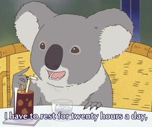 Koala, funny, and sleep image