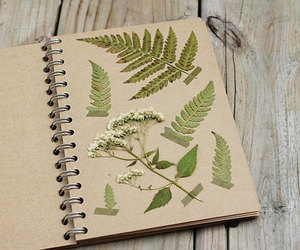 book, herbarium, and plants image