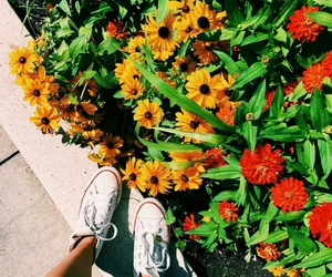converse, flowers, and grunge image