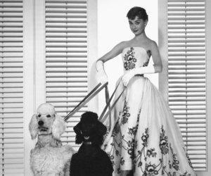 audrey hepburn, dog, and dress image