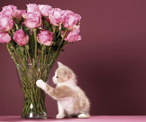 cat, pink, and roses image