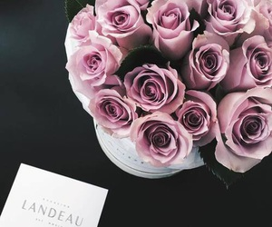luxury and rose image