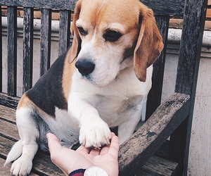 dog, beagle, and best friends image