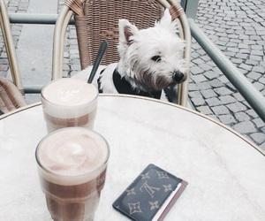 dog, drink, and animal image