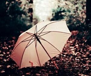 umbrella, pink, and autumn image