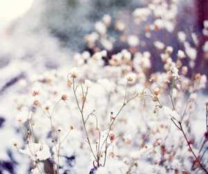 flowers, nature, and snow image