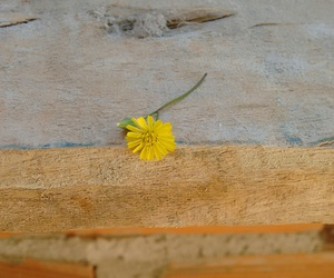 amarelo, flower, and flowers image