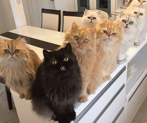 animals, cats, and kitty image