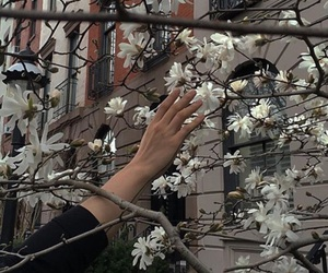 flowers, aesthetic, and hand image