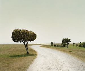 landscape, photography, and gotland image