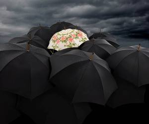 umbrella, black, and flowers image