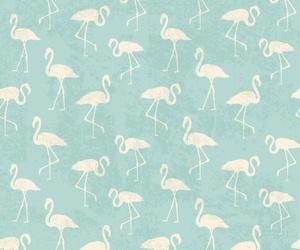 flamingos and wallpaper image