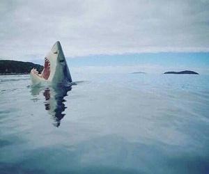 shark, ocean, and blue image