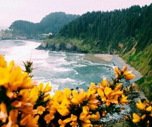 flowers, tropical, and beach image
