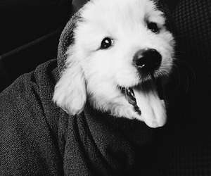 adorable, black and white, and dog image