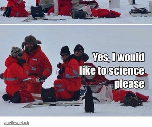 animals, funny, and penguin image