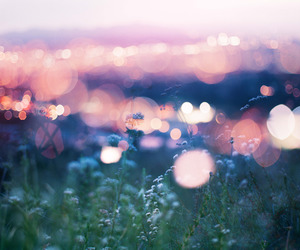 light, flowers, and photography image