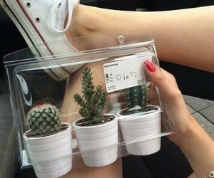 beautiful, cactuses, and tumblr image