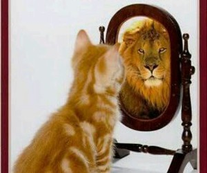 lion, cat, and quotes image