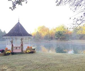 autumn, decor, and fall image