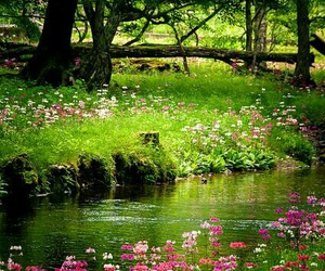 nature, flowers, and green image
