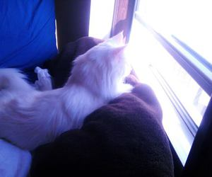 cat, light, and white image