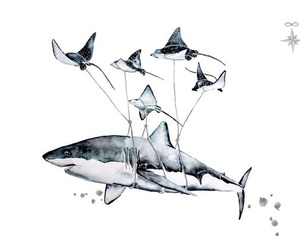 art, illustration, and shark image