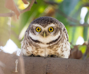 owl, nature photography, and birding image