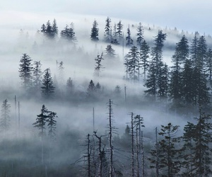 blue, forest, and cloud image