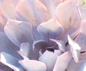 theme, purple, and lilac image