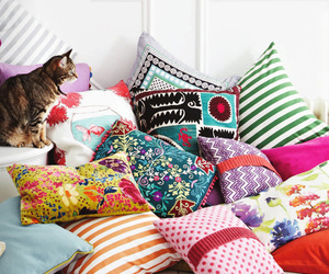 cat, pillow, and colors image
