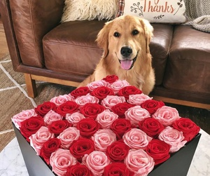 dog, rose, and flowers image