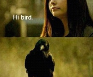 tvd, bird, and elena image