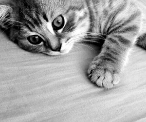 kittycat and cute image