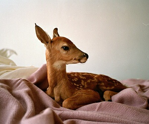 animal, cute, and deer image