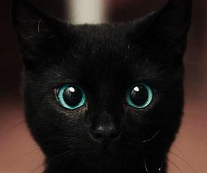 black, cat, and sweet image